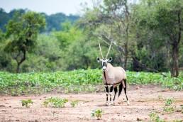 oryx langkloof